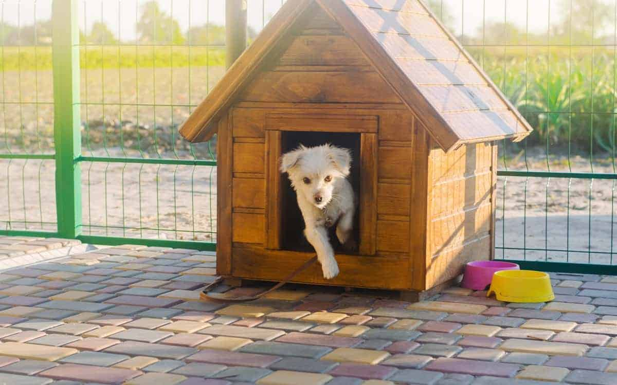 Best Outdoor Dog Houses - pawscessories.com