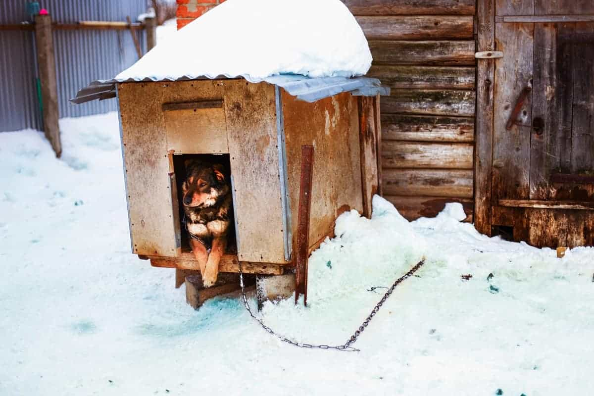 How to Keep a Dog House Warm in the Winter - pawscessories.com
