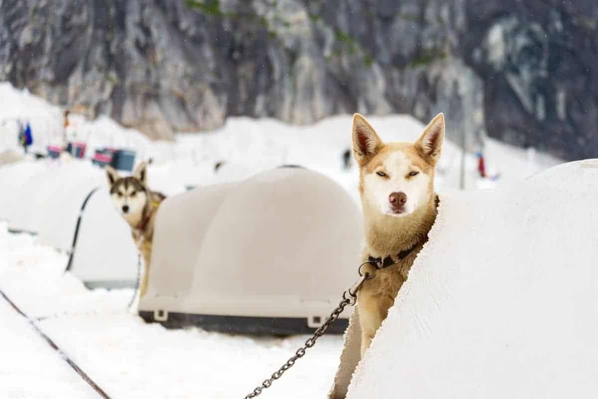 Petmate Igloo Dog House Review - pawscessories.com
