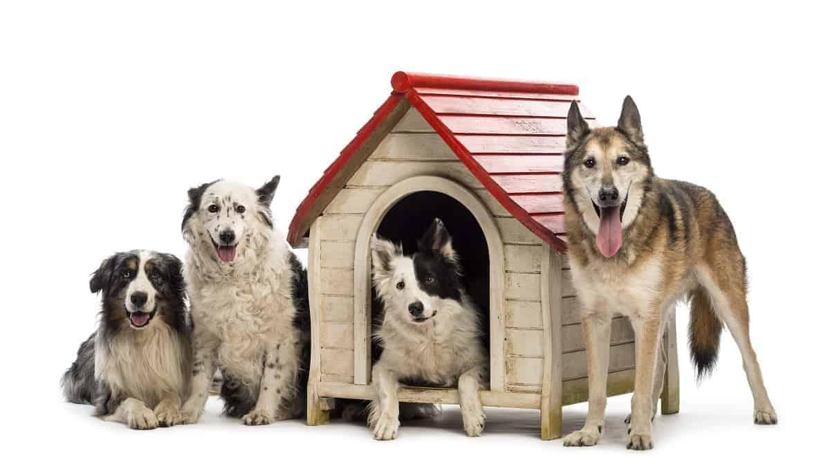 Suncast DH350 Dog House Review - pawscessories.com