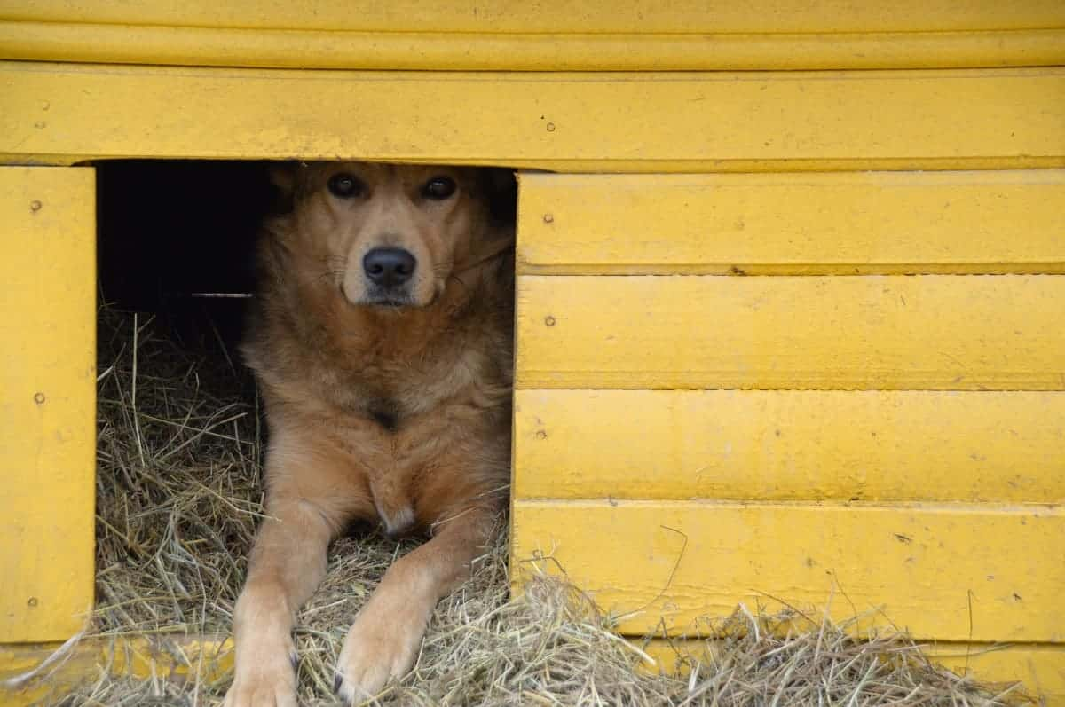 What to Put in a Dog House for Bedding - pawscessories.com