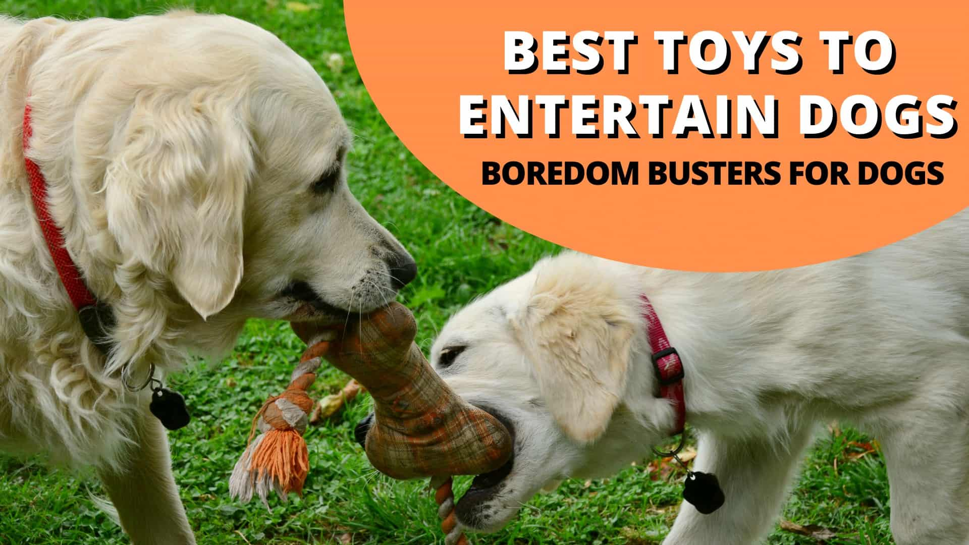 Best Toys To Entertain Dogs (BoredomBustersForDogs)