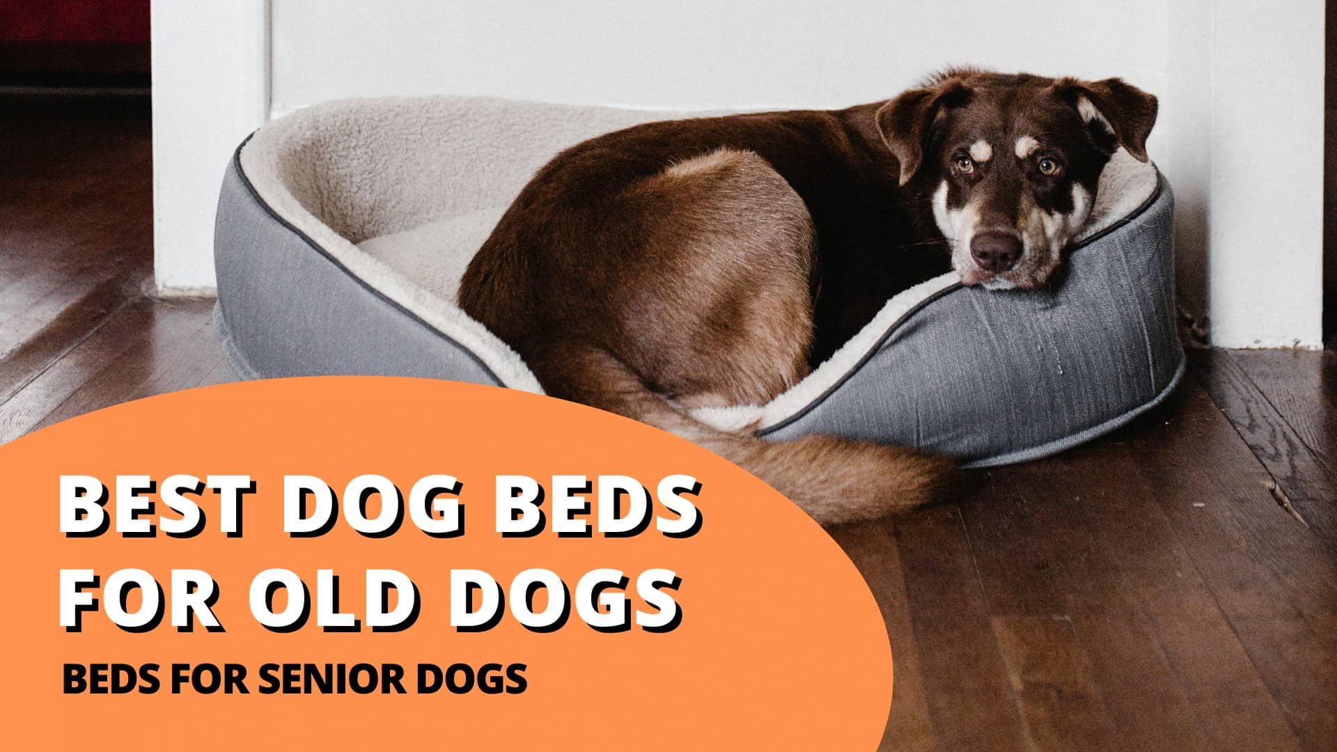 Best dog beds for old dogs (beds for senior dogs)