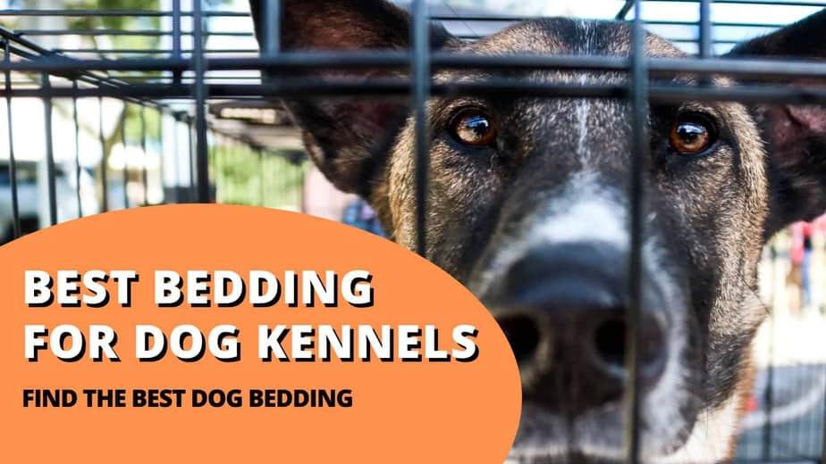 best bedding for dog kennel