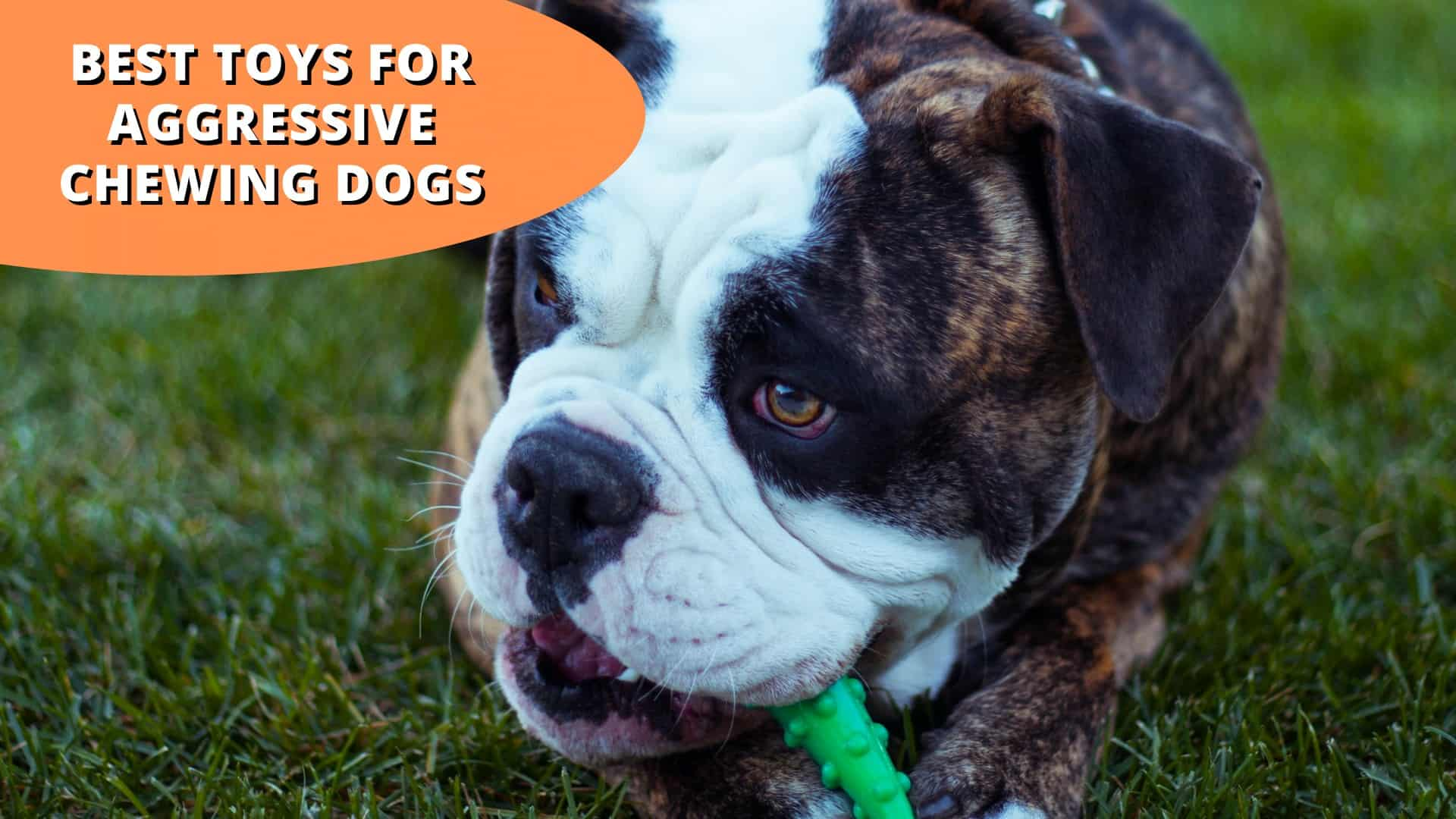 best toys for aggressive chewing dogs