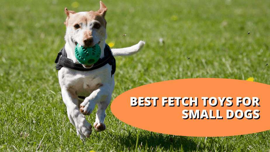 Best Fetch Toys For Small Dogs