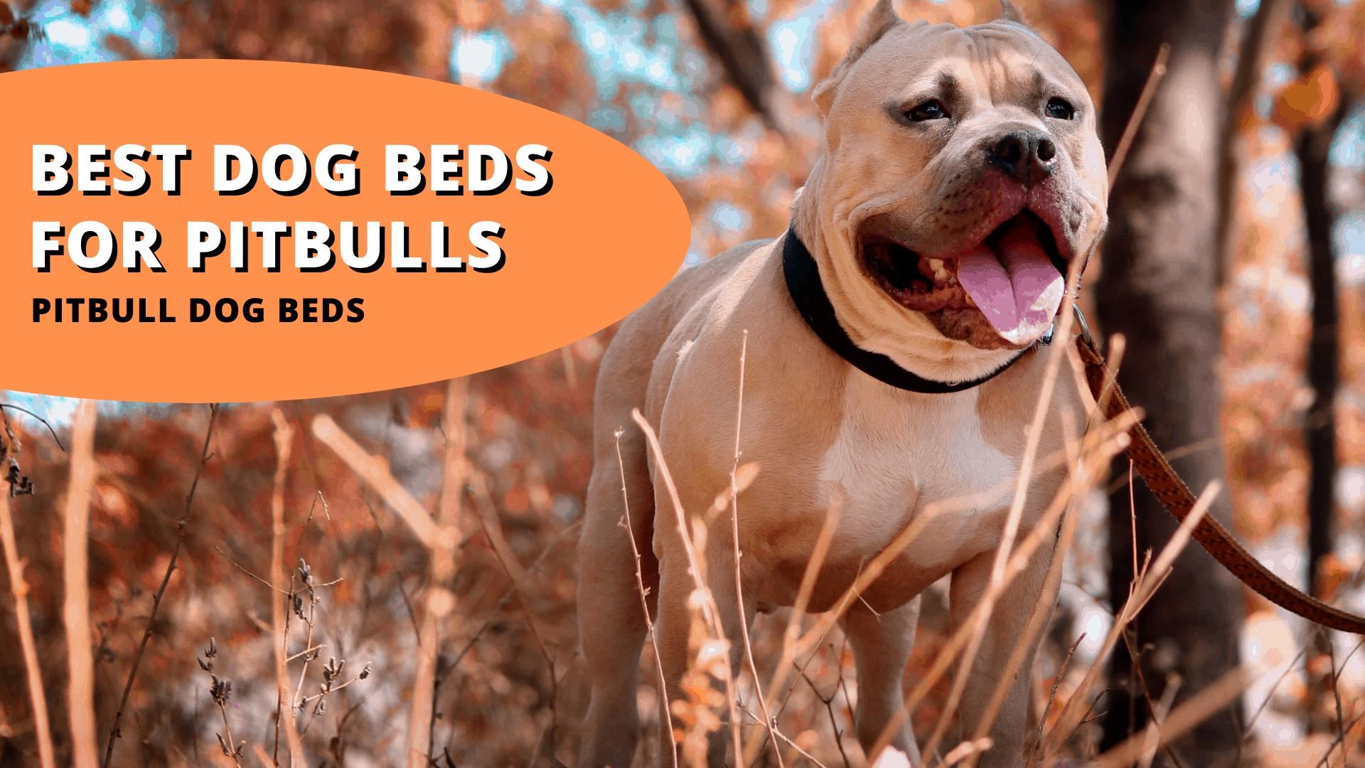 Best dog beds for pitbulls