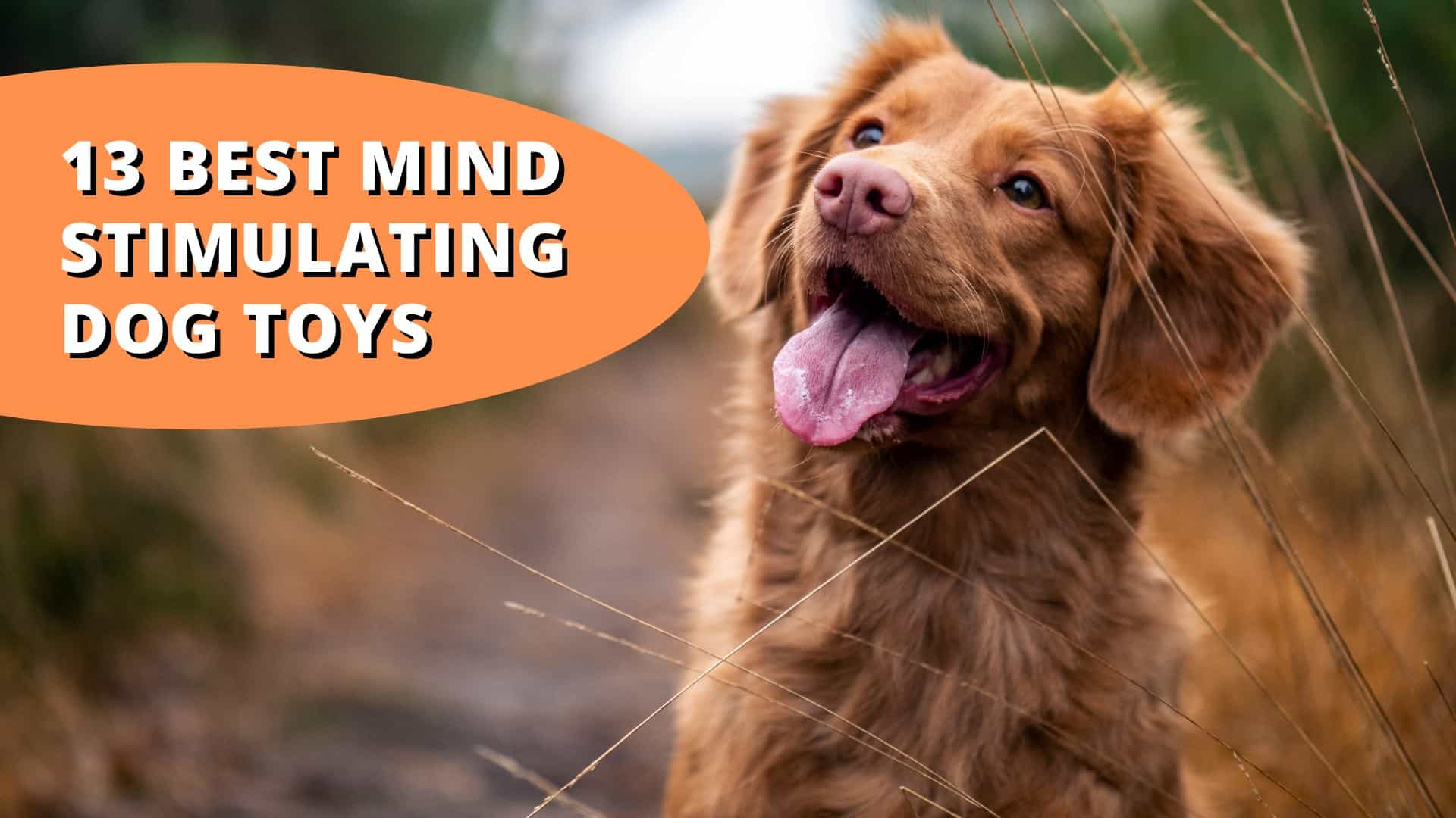 Best mind stimulating dog toys