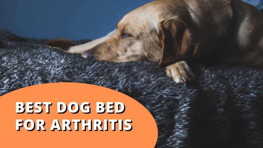 best dog bed for arthritis