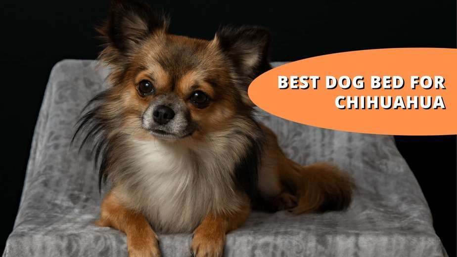 best dog bed for chihuahua