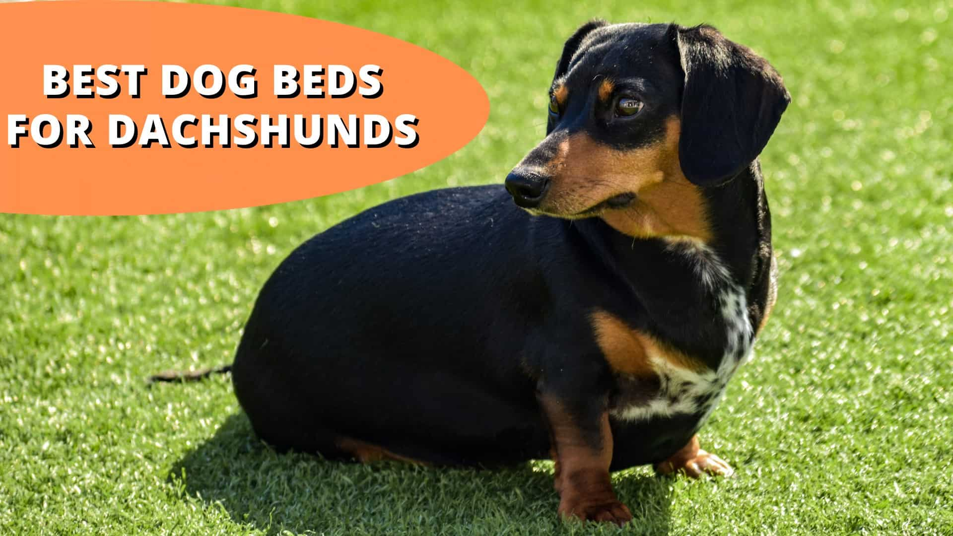 best dog beds for dachshunds