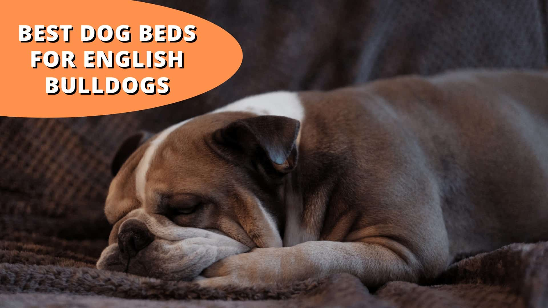 best dog beds for english bulldogs