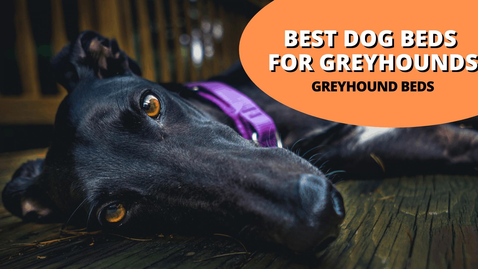 best dog beds for greyhounds (Greyhound beds)