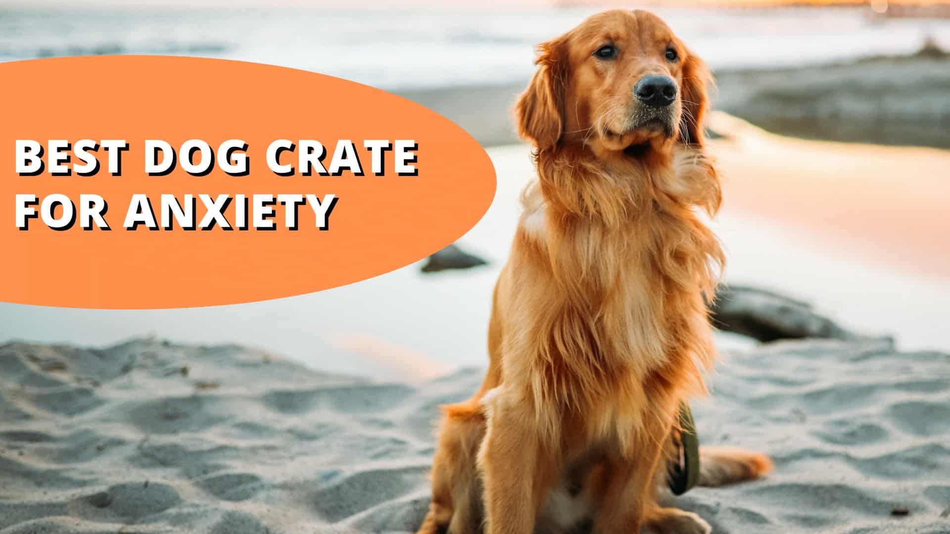 best dog crate for anxiety