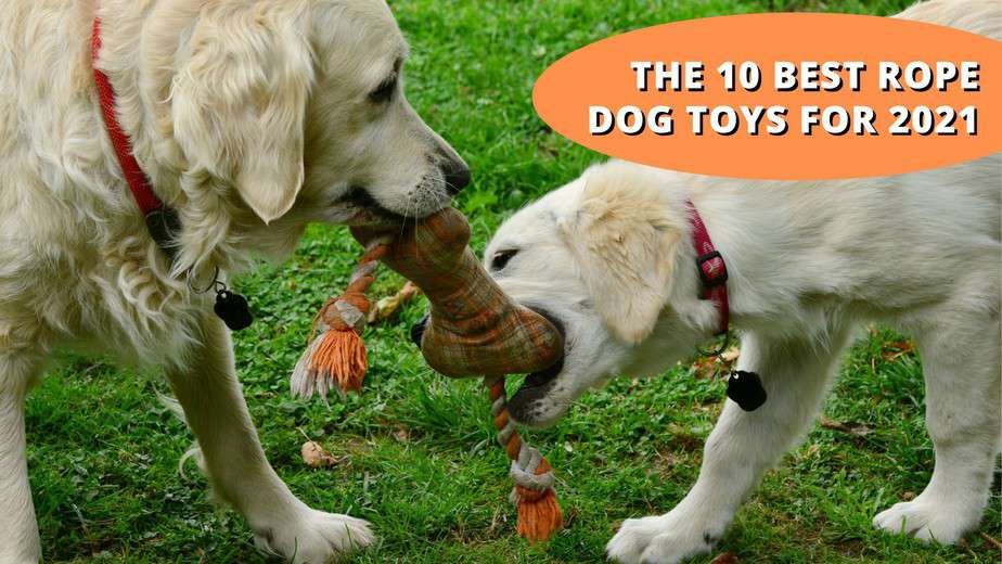 best rope dog toy
