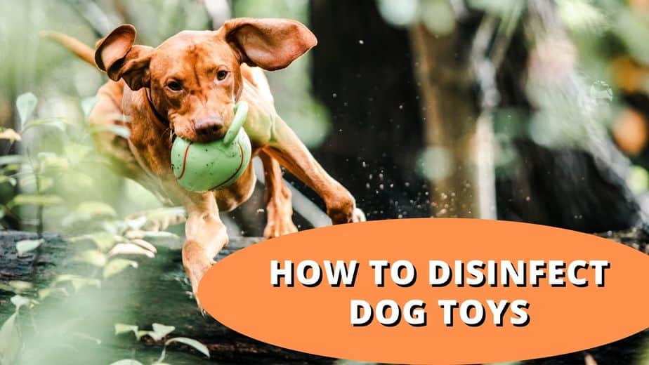 How to disinfect dog toys