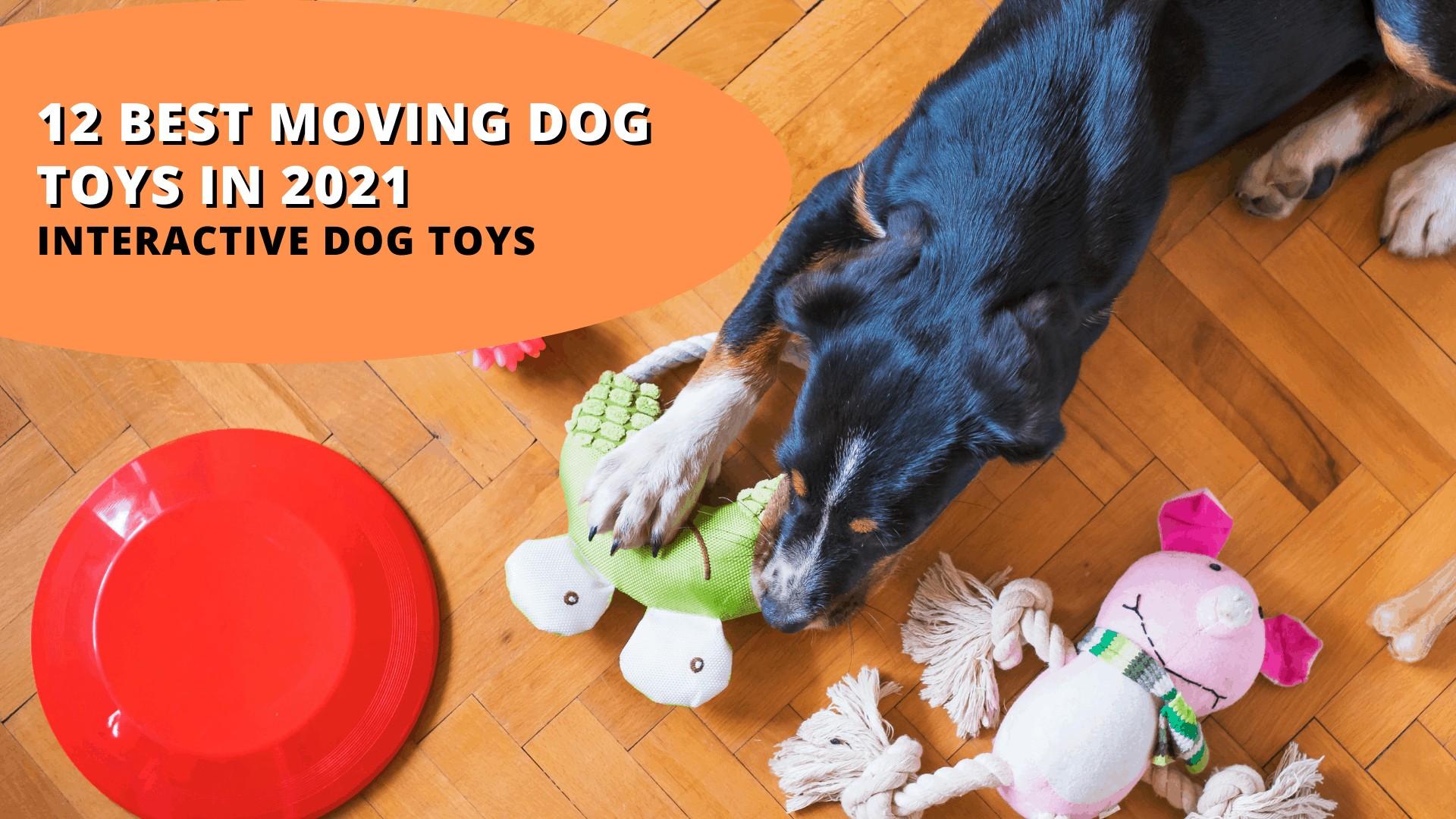 Moving Dog Toys