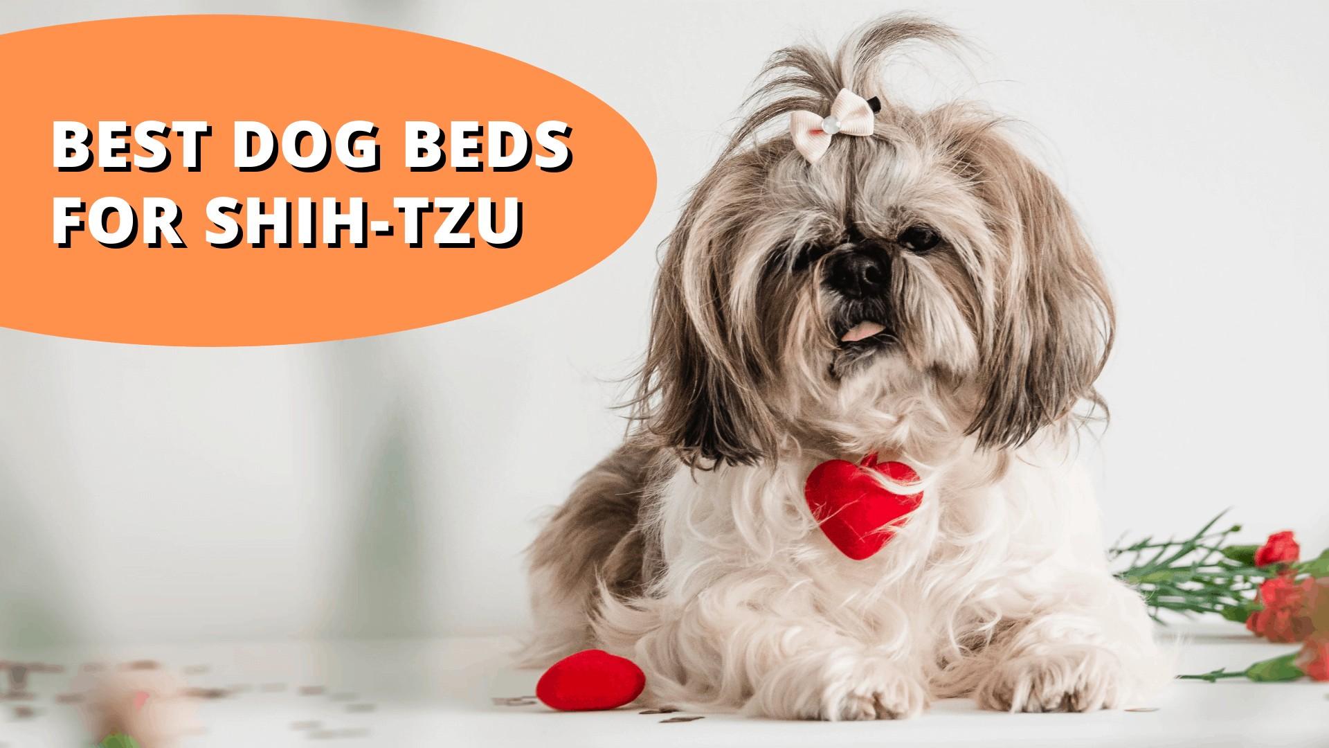 best dog beds for shih tzu
