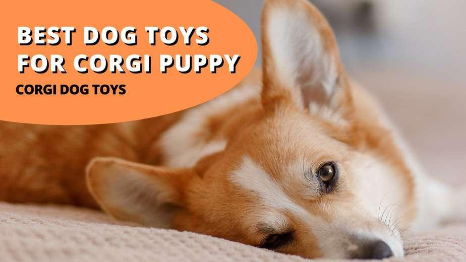 best dog toys for corgi puppy