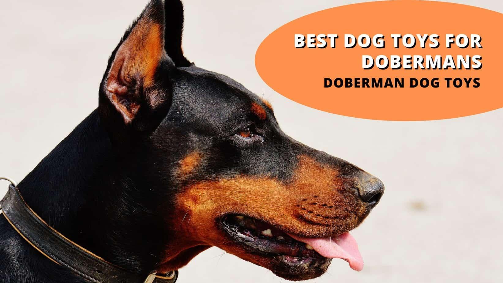 best dog toys for dobermans