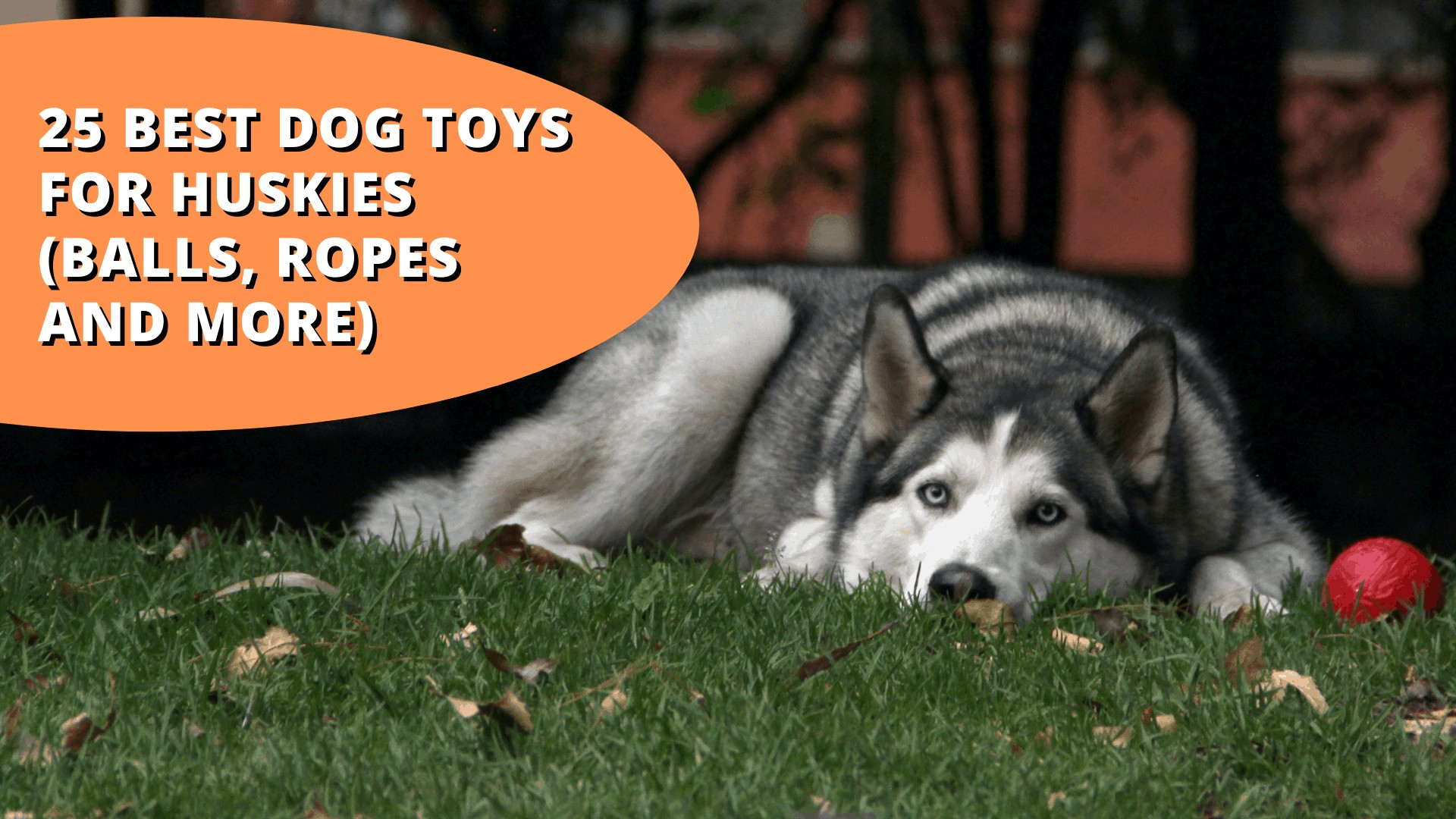 best dog toys for huskies
