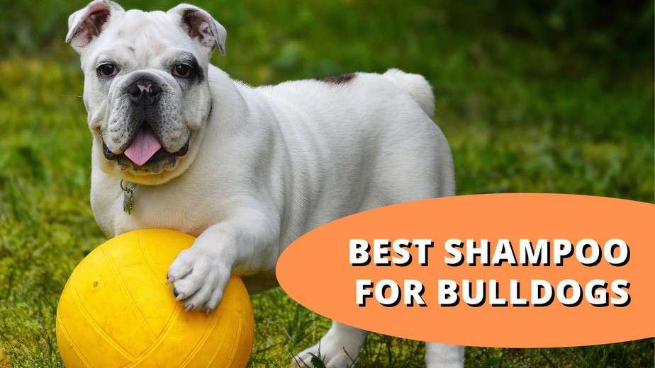 best shampoo for bulldogs
