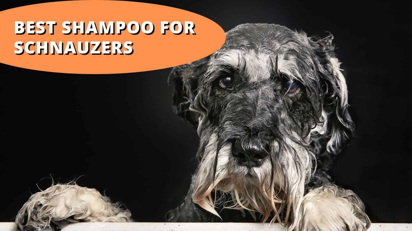 best shampoo for schnauzers
