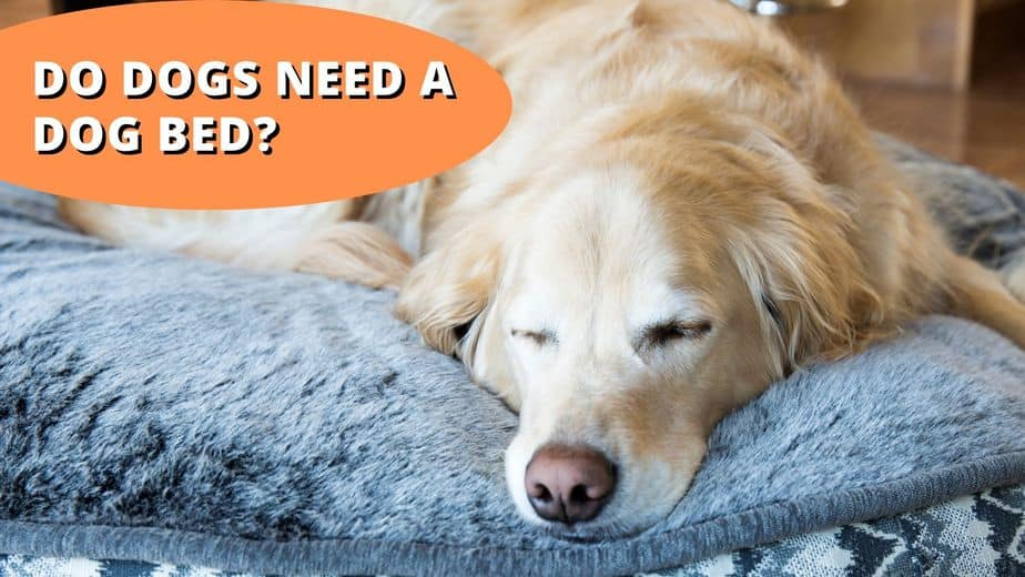 do dogs need a dog bed