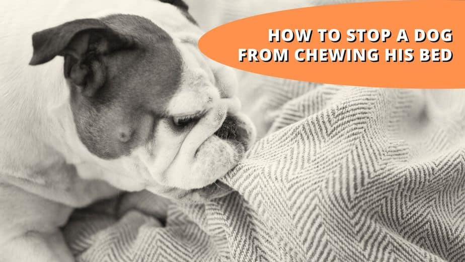 how to stop a dog from chewing his bed