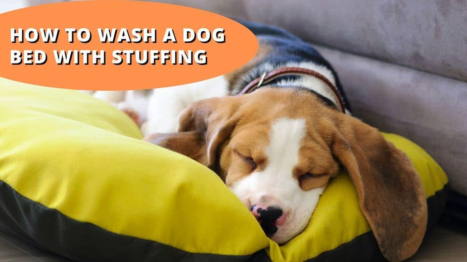 how to wash a dog bed with stuffing