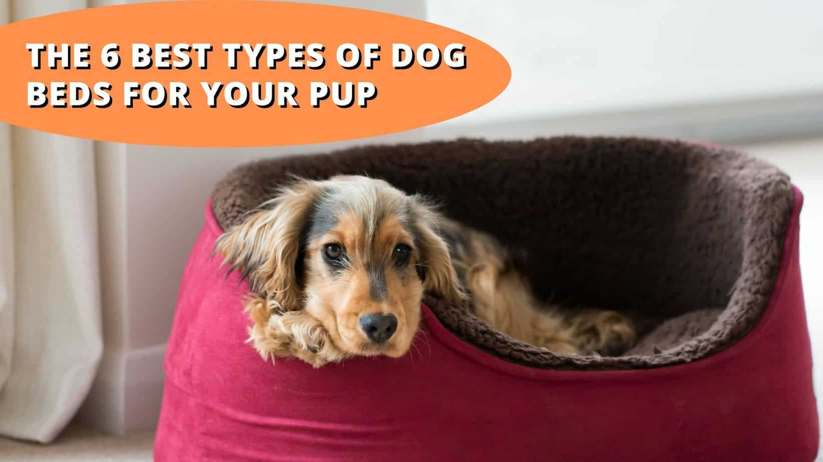 what is the best type of dog bed