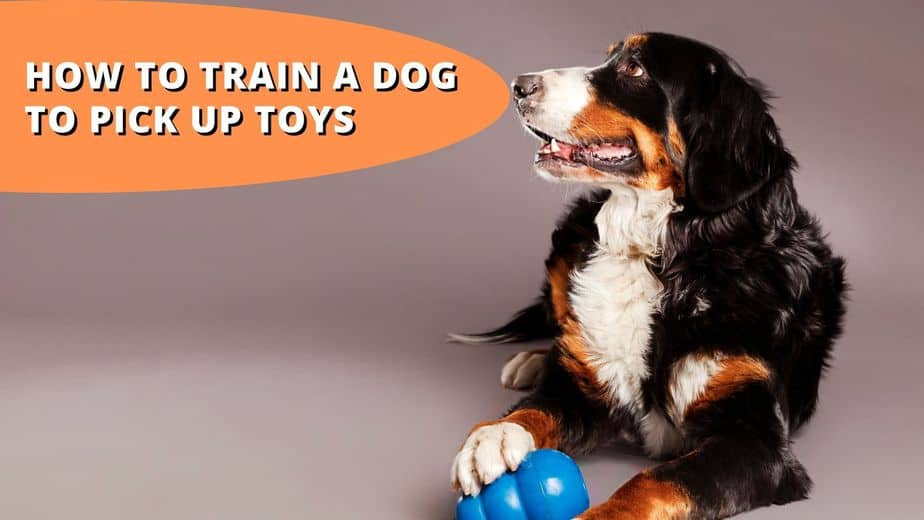 How To Train A Dog To Pick Up Toys