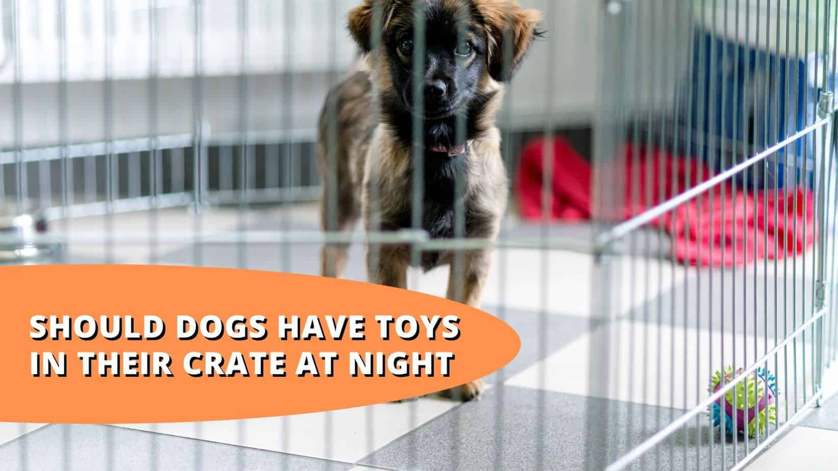 Should Dogs Have Toys In Their Crate At Night