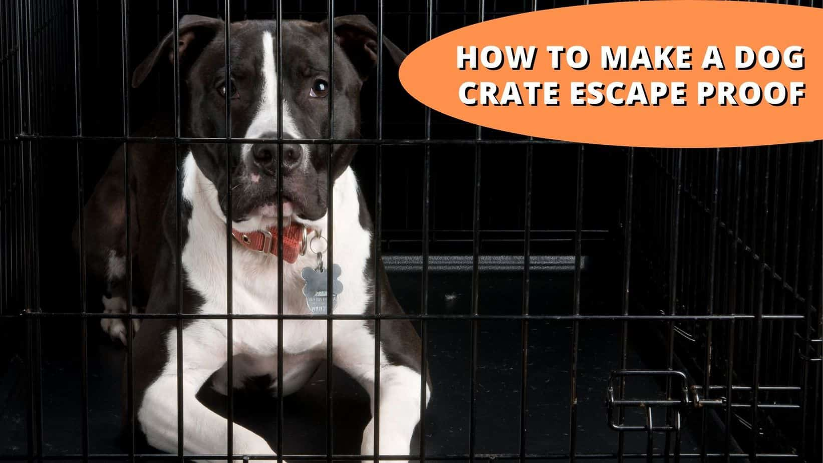 how to make a dog crate escape proof