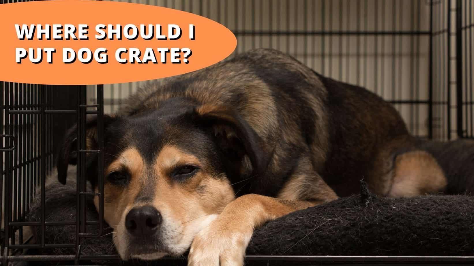 where should i put dog crate