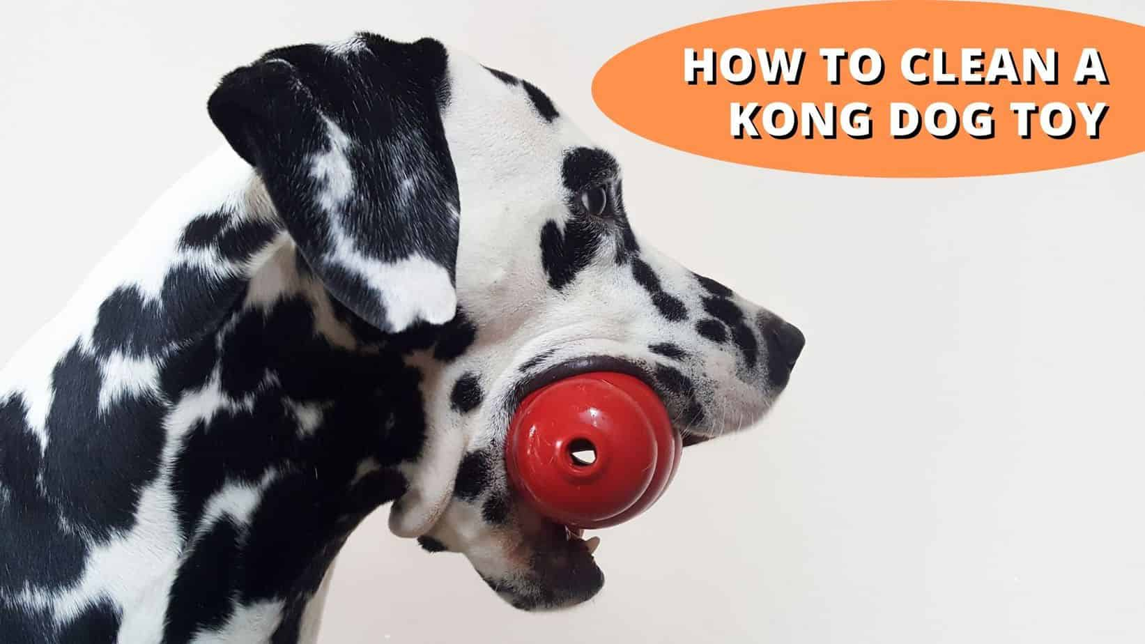how to clean a kong dog toy