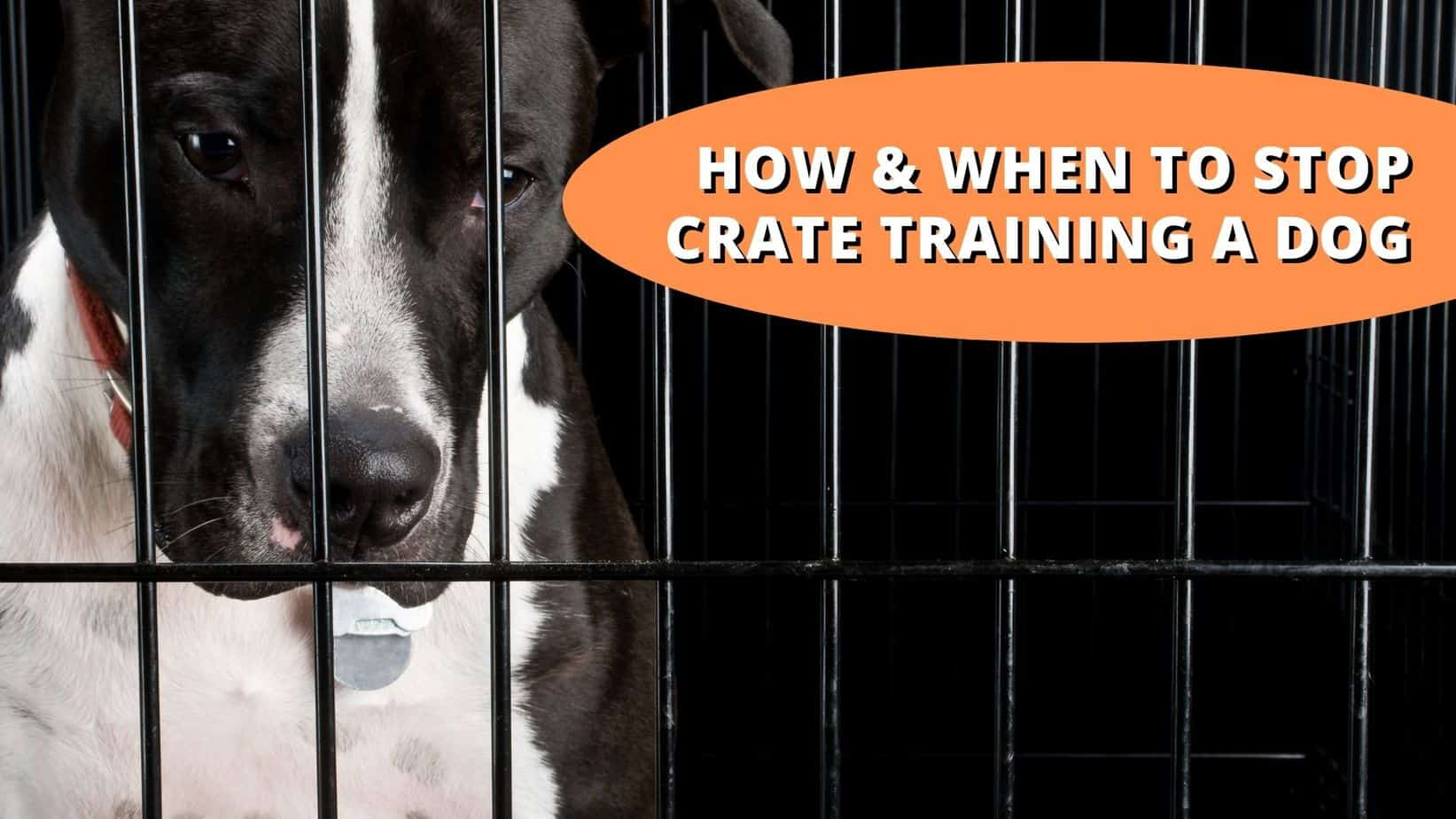 when to stop crate training a dog