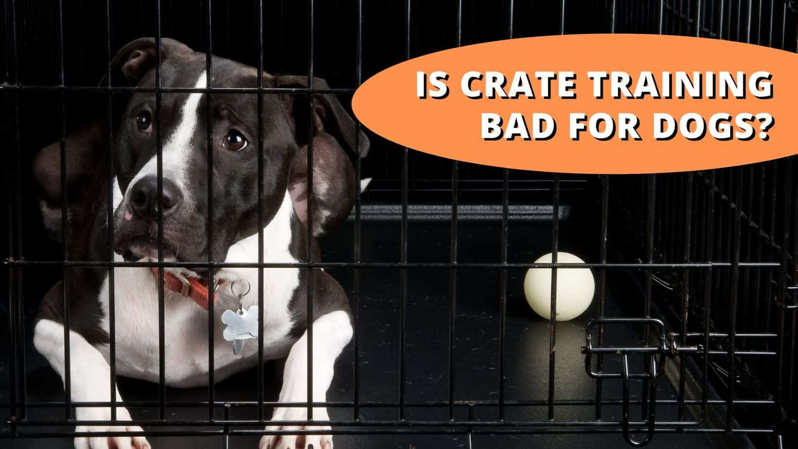 is crate training bad for dogs