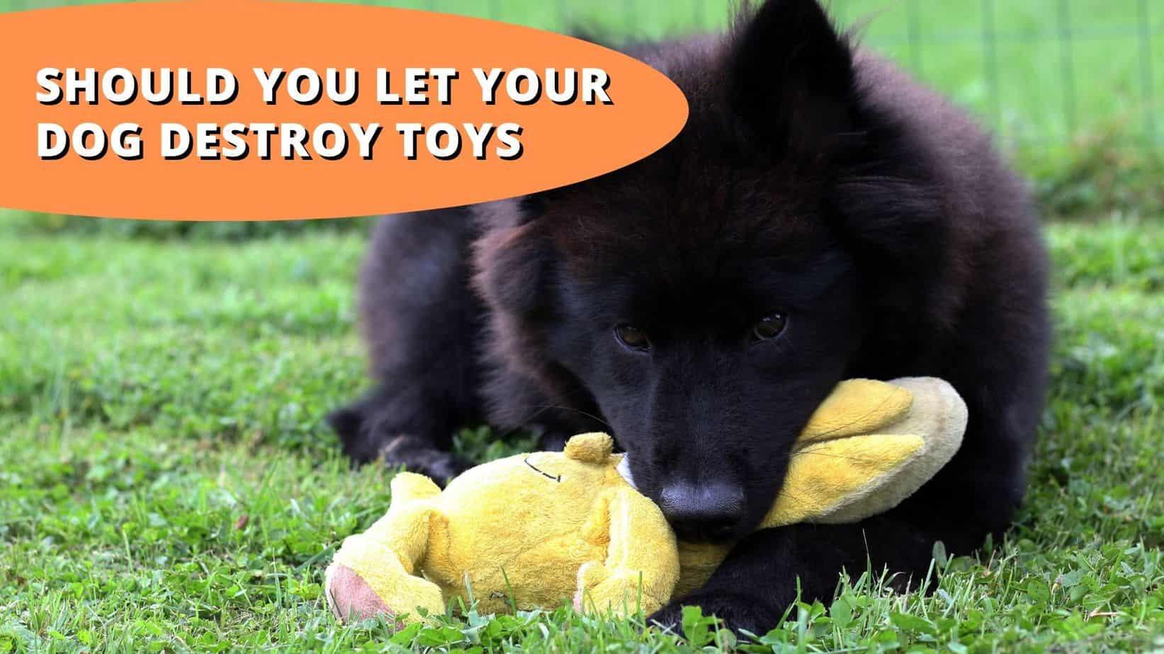 should you let your dog destroy toys