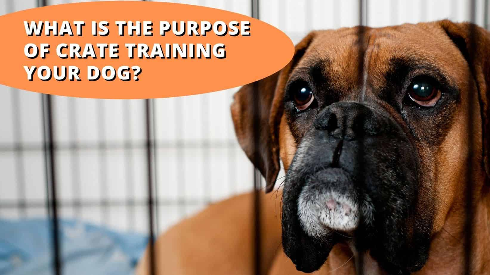 What's the Purpose of Crate Training Your Dog