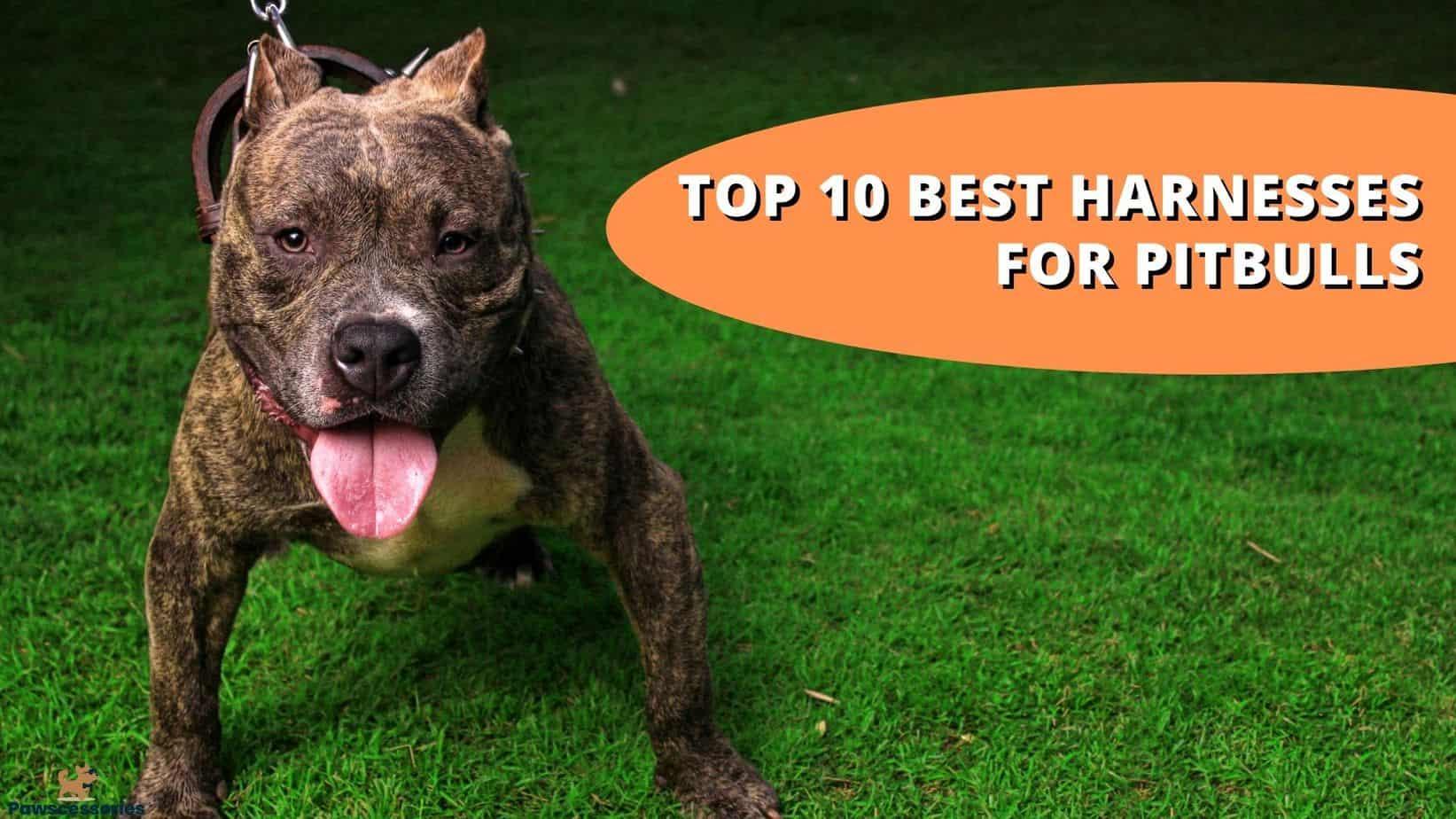 best harness for pitbulls
