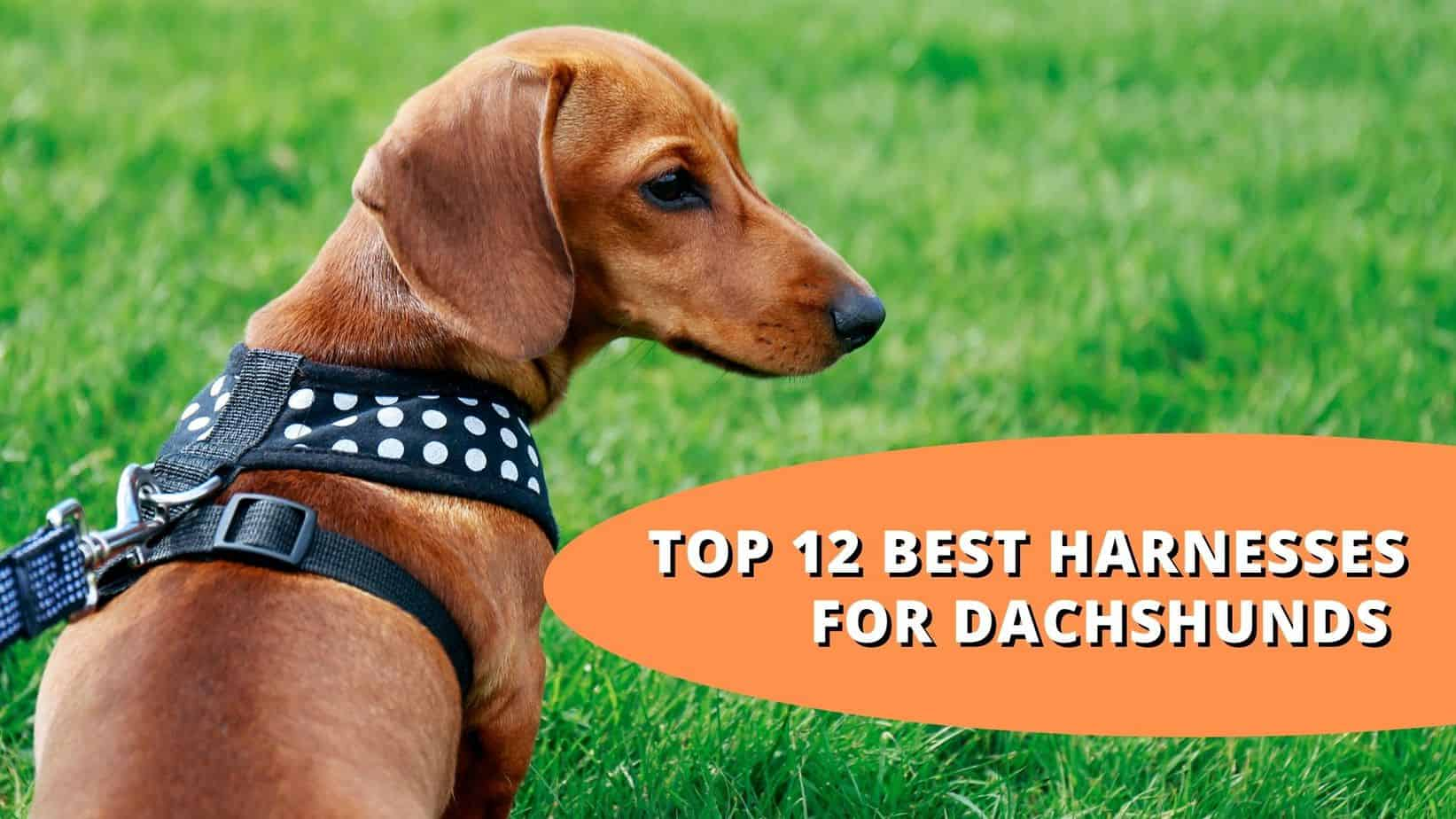 Harnesses for dachshunds