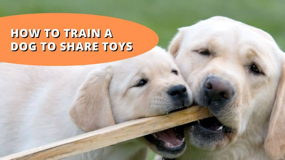 How To Train A Dog To Share Toys