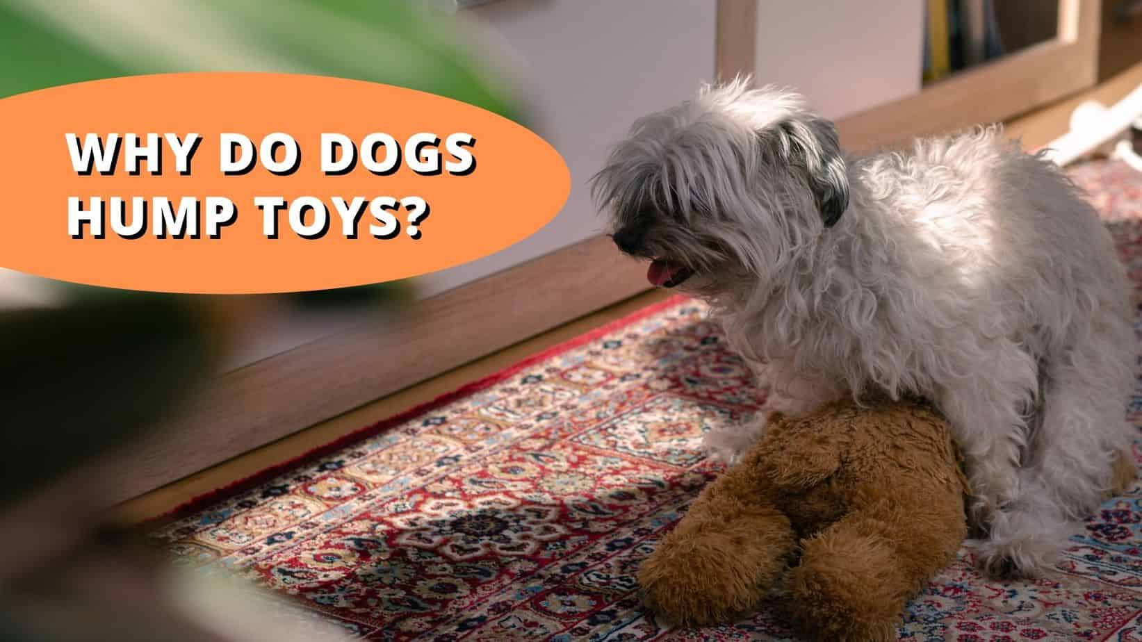 Why do dogs hump toys?