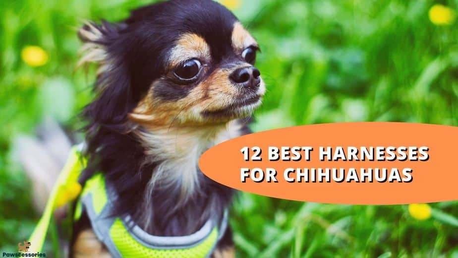 best harness for chihuahua