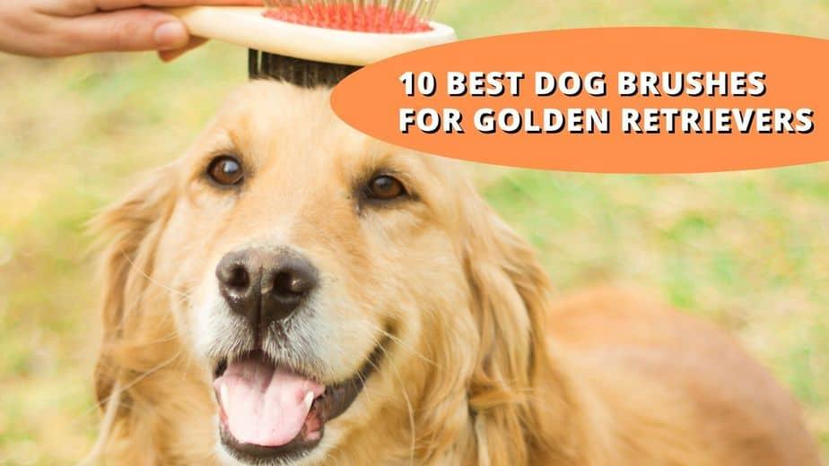 best brush for golden retriever