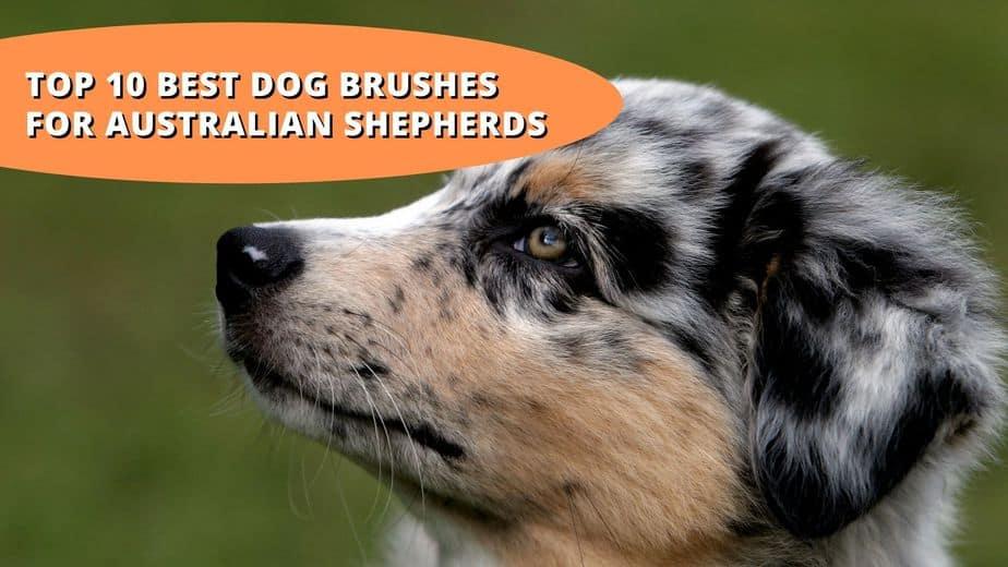 best brush for australian shepherd