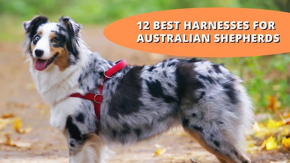 best harness for australian shepherd