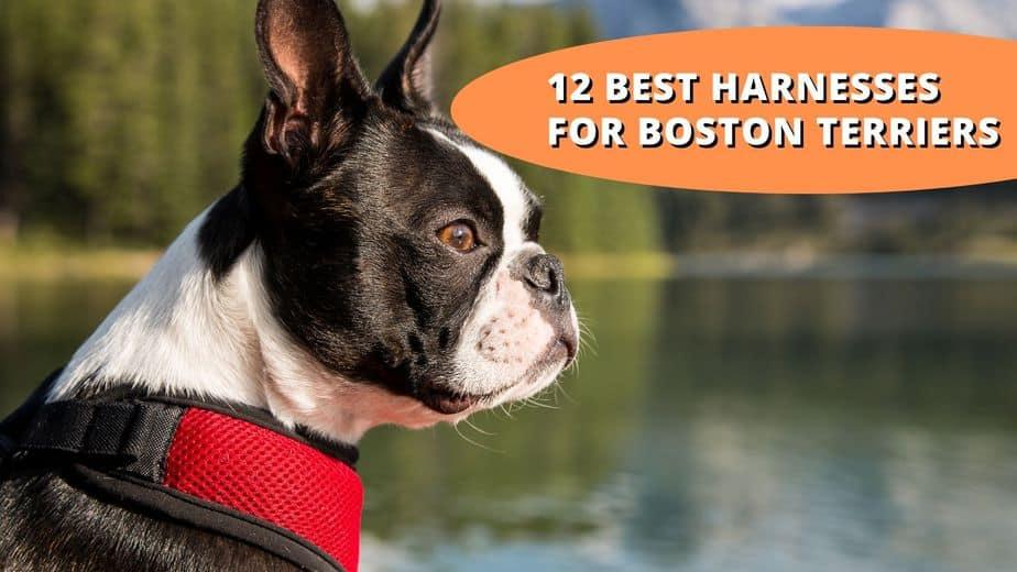 best harness for boston terrier