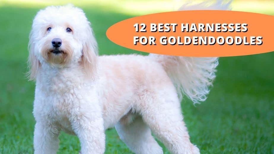 best harness for goldendoodle